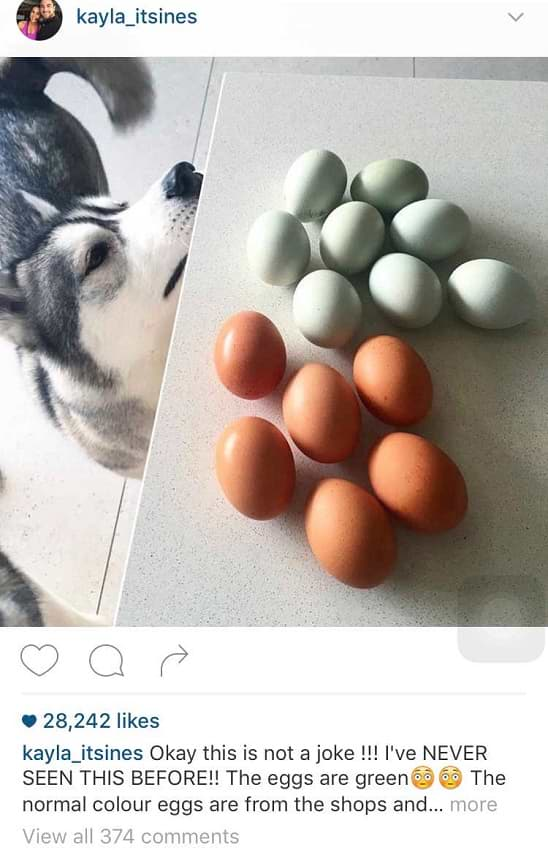 Call To Action in Instagram Text Copy
